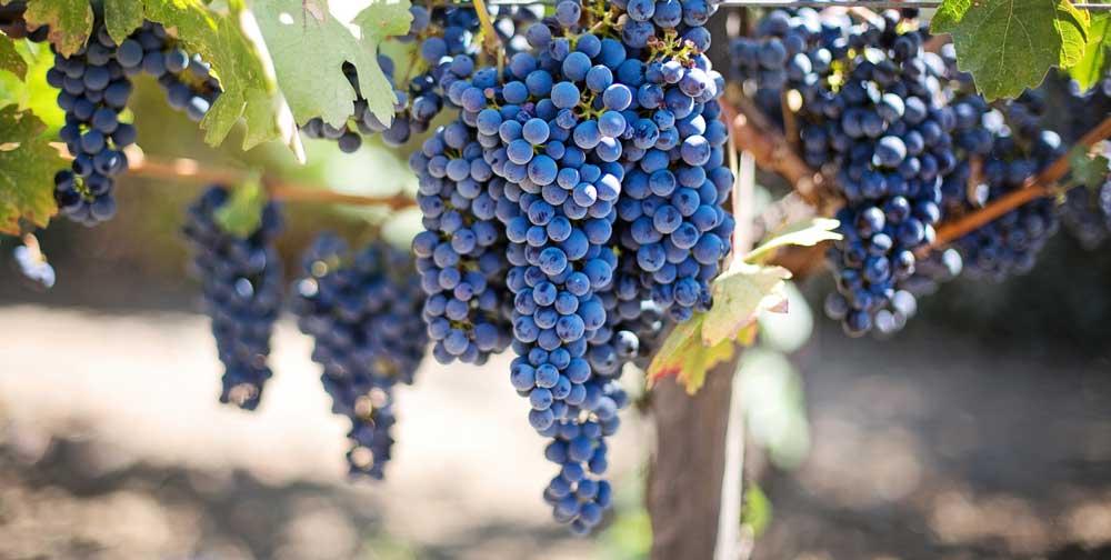 clasificacion vinos españa, nomenclatura vinos